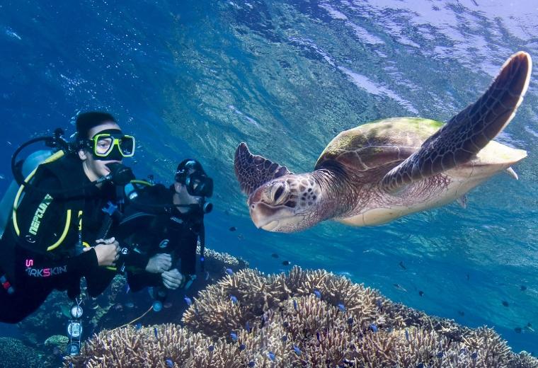 prodive_turtle1